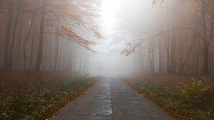 На смену затяжным дождям в Воронежскую область придёт туман