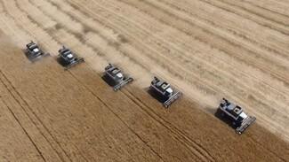 В Воронежской области аграрии убрали 2 млн тонн зерна