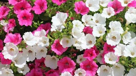В Воронеже на создание цветников и газонов потратят 25 млн рублей