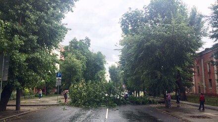 Рухнувшее во время урагана дерево перекрыло дорогу в центре Воронежа