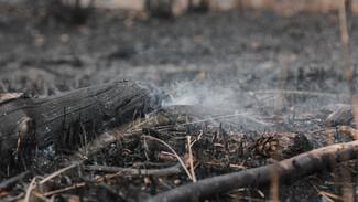 В Воронежской области потушили последний ландшафтный пожар