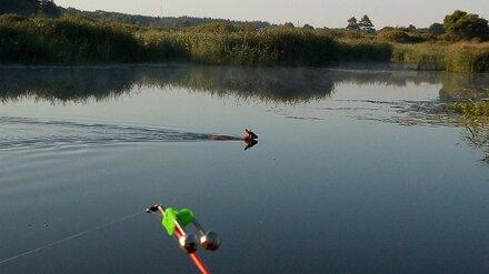 В Воронеже рыбак спас тонущую в Дону косулю