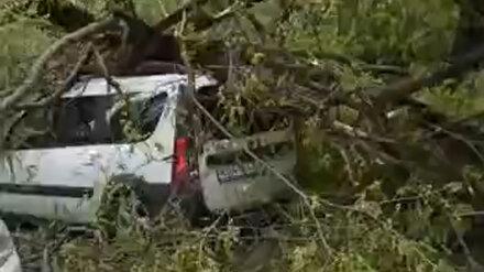 Обиженная УК предложила наказать воронежца, на машину которого рухнуло дерево