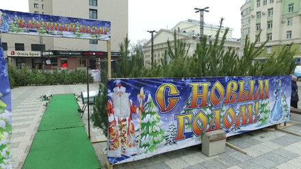 В Воронеже объявили график работы ёлочных базаров