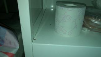 Жительница Воронежа о тараканах в детской больнице: «Родители ночами отгоняют их от малышей»