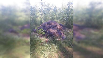В микрорайоне Воронежа обнаружили гниющую свалку картофеля