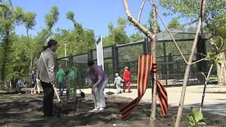 Аллея Памяти будет расти в бывшем парке Авиастроителей