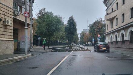 Упавшее дерево заблокировало половину дороги в центре Воронежа