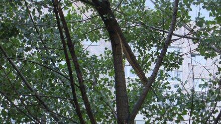 Спасатели сообщили о 8 поваленных мощным ветром деревьях в Воронеже