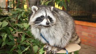 Животные Воронежского зоопарка предскажут, какой будет весна-2018