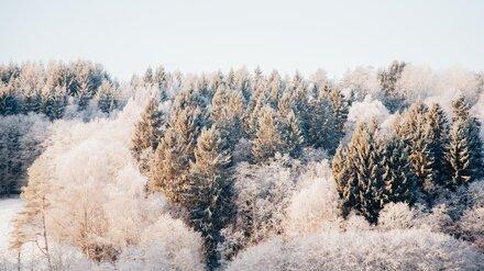 Метеорологи пообещали морозную рабочую неделю в Воронежской области