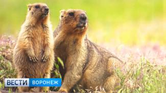 Рождение уникального кадра. Воронежцам показали фотографии дикой природы