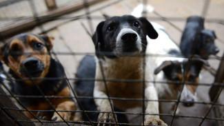 «Чёрный рынок» животных: чем опасно бесконтрольное разведение собак и кошек
