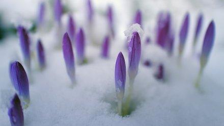В Воронежском заповеднике весна наступила на пять недель раньше срока