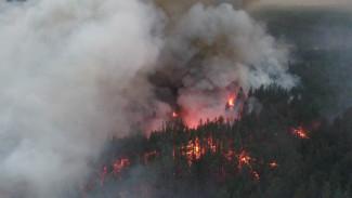 Готовились привлечь авиацию. Как спасали людей и животных от пожаров в воронежских лесах