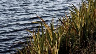 В Воронежском водохранилище нашли тело женщины