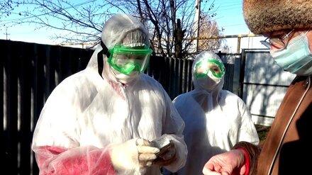 За сутки коронавирус обнаружили ещё у 192 воронежцев