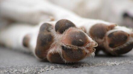 В Воронеже за полгода отловили 485 бездомных собак