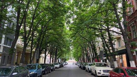 Полиция начала поиски изуродовавших «парижскую» каштановую аллею в Воронеже