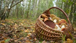 В Воронежской области семья с 8-летним ребёнком отправилась за грибами и заблудилась