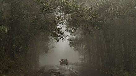 Метеорологи предупредили воронежцев об опасном тумане
