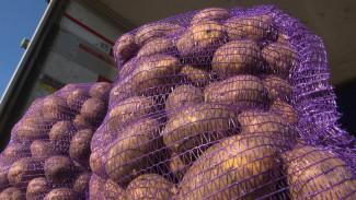 Воронежцев напугали ростом цен на картофель