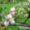 Метеорологи предупредили воронежцев о майских заморозках