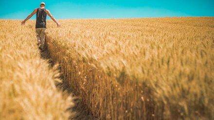 Воронежский фермер обманул банк на 3,2 млн рублей