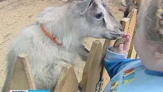 """Зоопарк и """"Парус надежды"""" организовали зоотерапию для больных детей"""