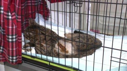 В Воронеже расстрелявший кота экс-полицейский избежал наказания