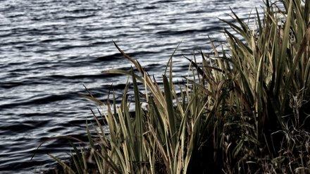 На берегу Воронежского водохранилища нашли убитого мужчину