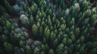 Гектары спасённого леса и не только: в Воронеже подвели итоги Года экологии