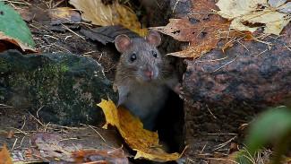 Воронежские филологи объяснили значение выражения «гора родила мышь»