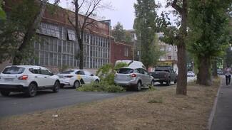 В Воронеже упавшие из-за урагана деревья повредили семь автомобилей