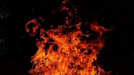 В Воронежской области автомобиль загорелся после столкновения с деревом