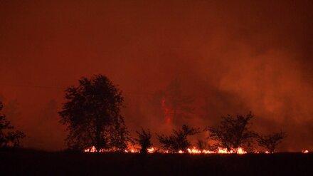 Мощный лесной пожар вблизи воронежского хутора потушили спустя сутки