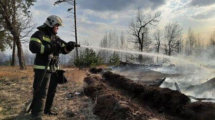 В районе Воронежской области локализовали мощный пожар