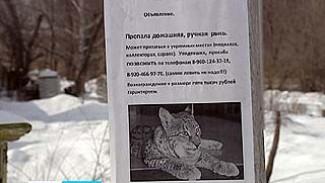 В поселке Придонском из частного дома убежала рысь