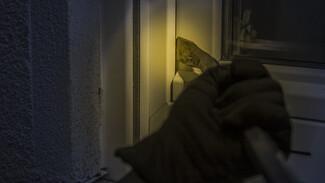 В Воронеже банда рецидивистов вынесла со склада магазина набитый деньгами ящик