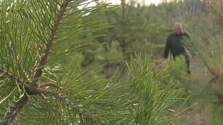 В Воронежской области открыли охоту на новогодних лесорубов