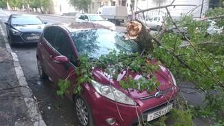 В центре Воронежа во время ночной грозы ветка дерева рухнула на Ford