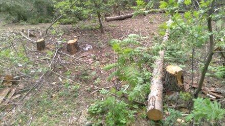 Воронежцы забили тревогу из-за вырубки деревьев в лесопарке Оптимистов