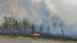 В Воронеже загорелся лес на Кожевенном кордоне: появилось видео