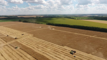 В Воронежской области спрогнозировали плохой урожай зерновых