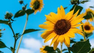 Метеоролог дала прогноз на вторую половину лета в Воронежской области
