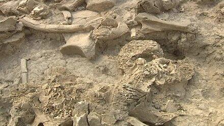 В воронежских Костёнках не нашли памятников археологии