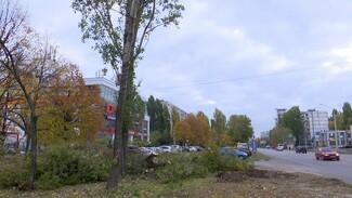 В Воронеже вырубили дерево ради рекламного баннера