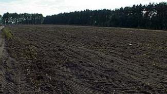 Теплая осень может оставить область без урожая