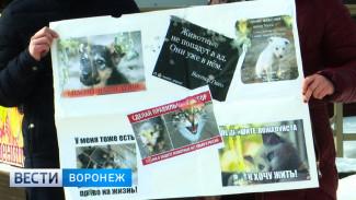 Воронежские зоозащитники требуют узаконить регистрацию животных