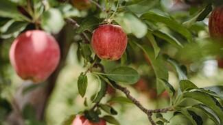 Воронежцы потребовали отказаться от застройки яблоневых садов